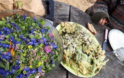 Stage printemps 21 MARS 2020 reconnaissance des plantes sauvages, médicinales et comestibles